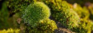 unique forest plants that show unique creations.